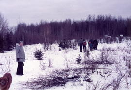 Finding a Christmas tree at Vandergusts.