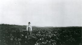 Arthur Corser in potato field at Redwater, Alberta.