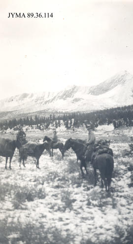 Packtrain in light snow, Jasper National Park, Alberta.