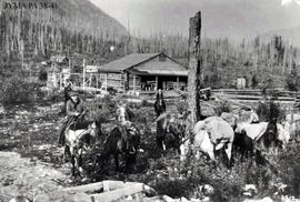 Curly Phillips camp at Mount Robson, British Columbia.