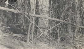 A set snare trap in the forest.