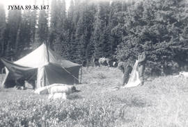 Camp at Moose Horn, Jasper National Park, Alberta.
