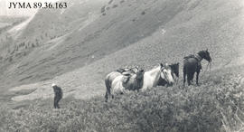 Billy Watson with horses, Jasper National Park, Alberta.