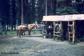 Saddle shed and horse, Maligne Lake, Jasper National Park, Alberta.