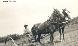 Bert Long with team of horses pulling a rake.