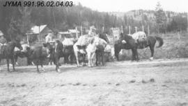 [Group of horses on the road], Jasper, Alberta