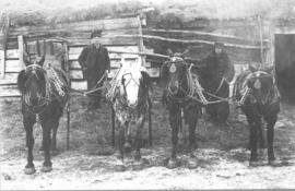 Reinholt and Company horse teams