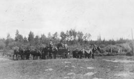 Wagon and horses, Red Deer