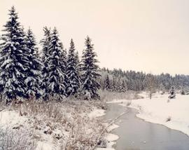 Waskasoo Creek in winter