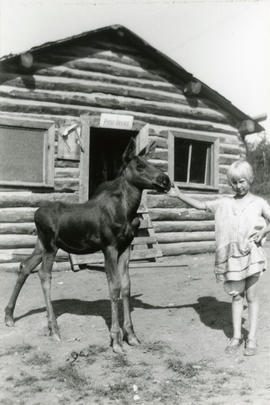 A Baby Moose By an Old Post Office