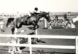 Amateur Show Jumping.