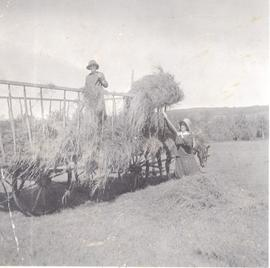 Two women loading a hay cart hitched to two horses, probably Millarville, AB.