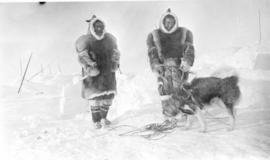 Unidentified Inuit Men Harnessing Dog
