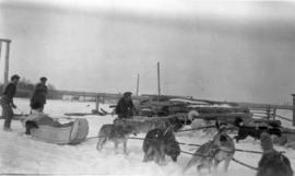 Men and Dog Teams Working for the Hudson's Bay Company