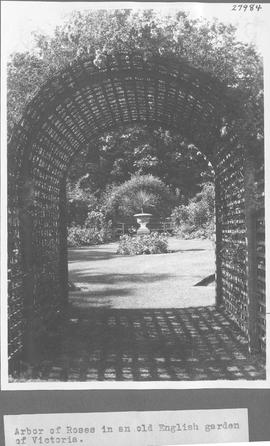 Arbor of roses in an old English garden of Victoria / 27984