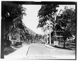 Palm Avenue, Hospital Grounds, Ancon, Canal Zone.  Avenida de las Palmas, Terrenos del Hospital, Ancon, Zona del Canal.