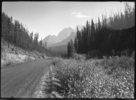 Jasper area and Jasper Highway
