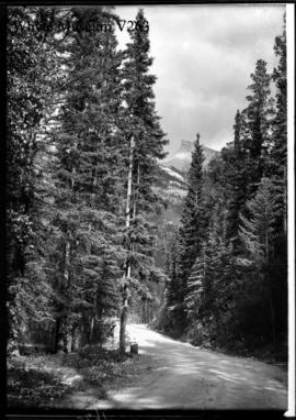 Road to Upper Hot Springs & Mt. Rundle
